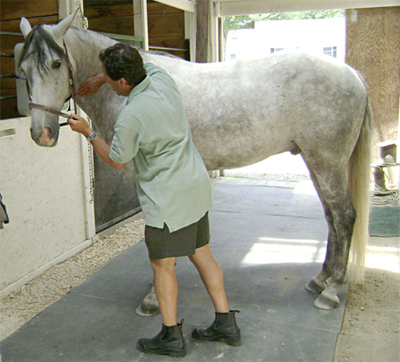 Horse Adjustment Picture